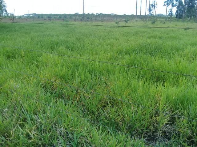 Chácara 08 hectares -próximo de C.Grande -Preço de 1.200.000 por 890.000 - Foto 3