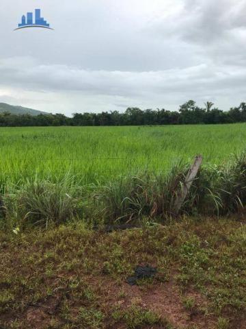 Fazenda 1850 has no município de Nobres-MT, na região de Bom Jardim; - Foto 10