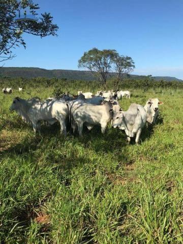 Fazenda 1850 has no município de Nobres-MT, na região de Bom Jardim; - Foto 5