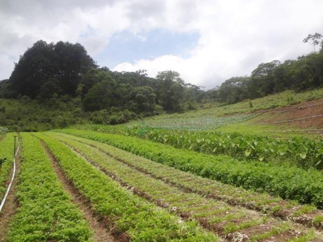 Sitio com 780.000 m² por R$ 1.150.000 - Ponte Nova - Teresópolis/RJ - Foto 16