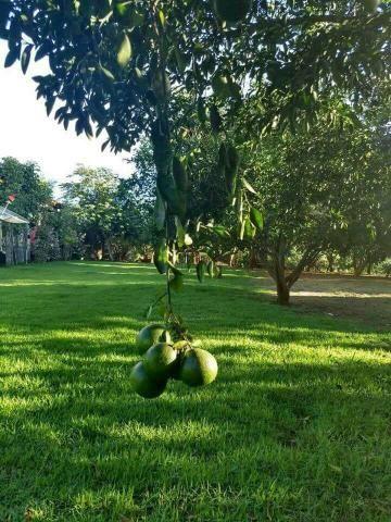 Fazenda 14alq Pronta Buritirana Palmas 1.2milh Ac Prop Airton - Foto 13