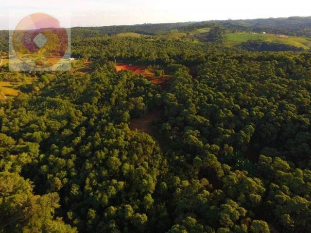 Chácara  à venda, 23000 m² por R$ 180.000 - Palmerinha - Campina Grande do Sul/PR - Foto 11