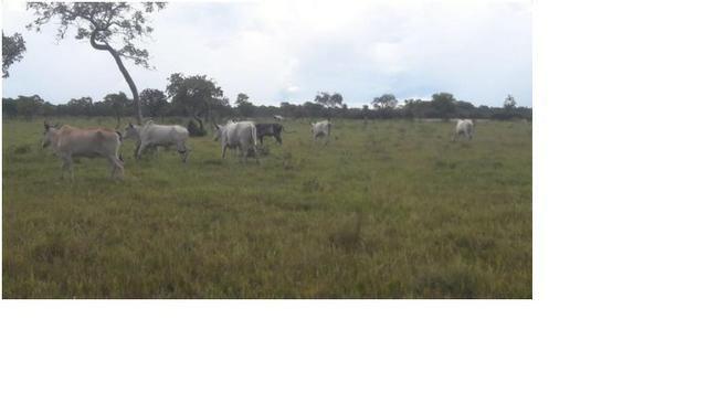40ha. 10km de Cuiabá mt -pastagens cercados, casa, poço semi-artesiano