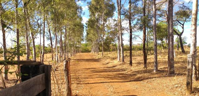 Fazenda 14alq Pronta Buritirana Palmas 1.2milh Ac Prop Airton - Foto 8
