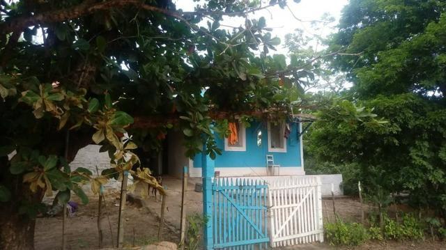 Ótima propriedade de 2 hectares, em Chã de Alegria-PE. R$ 140 mil - Foto 2