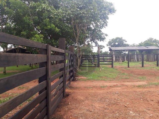 Fazenda 104 ha poconé mt - Foto 11