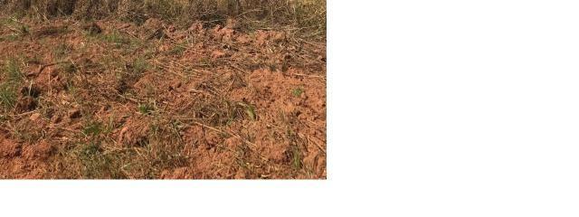 4800 hectares Pecuária e lavoura Região Nobres MT, Terras para plantio de Soja
