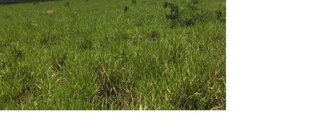 4800 hectares Pecuária e lavoura Região Nobres MT, Terras para plantio de Soja - Foto 2