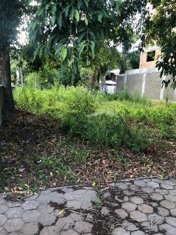 Terreno em zimbros - Foto 2