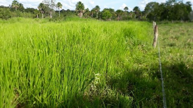 Fazenda com 150 hectares - Região da Soja (Balsas-MA) - Foto 8