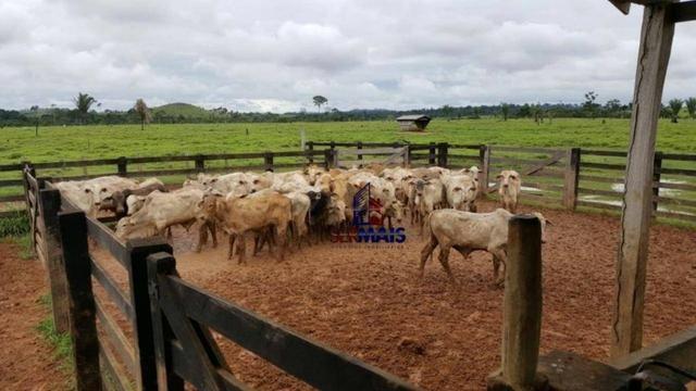Fazenda Localizada na cidade de Buritis-RO - Foto 18