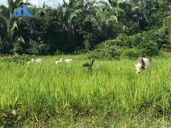 Fazenda 1850 has no município de Nobres-MT, na região de Bom Jardim; - Foto 7