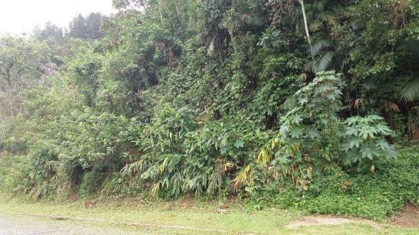 Terreno à venda, 2331 m² - Comary - Teresópolis/RJ - Foto 3