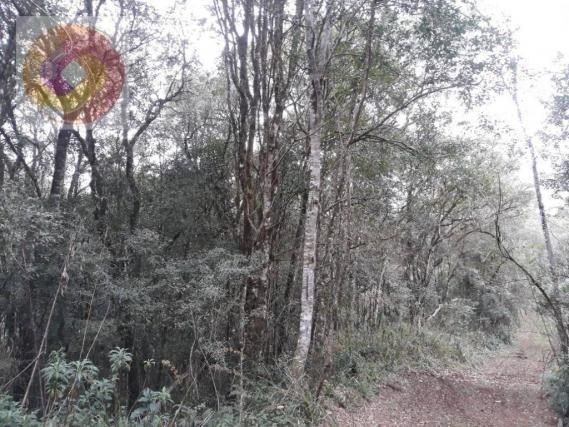 Chácara  à venda, 23000 m² por R$ 180.000 - Palmerinha - Campina Grande do Sul/PR - Foto 10