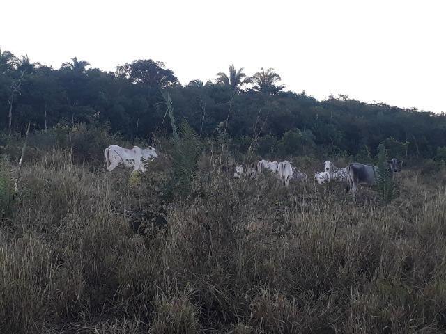 Chácara em Acorizal 38,2 hectares - Foto 11
