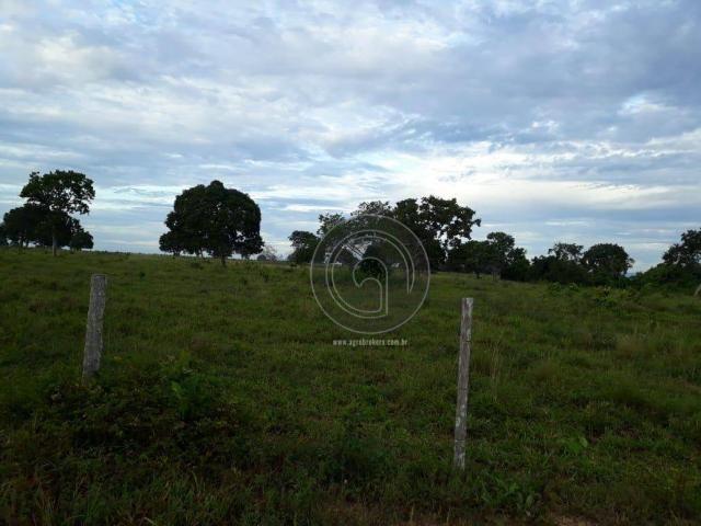 Fazenda 104 ha poconé mt - Foto 3