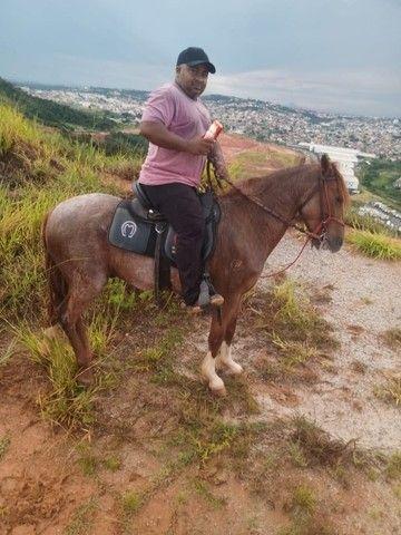 Cavalo marcha picada - Foto 2