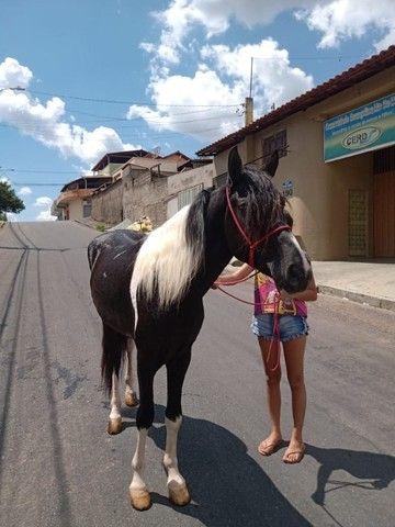 Cavalo Pampa Mangalarga Garanhão - Foto 2