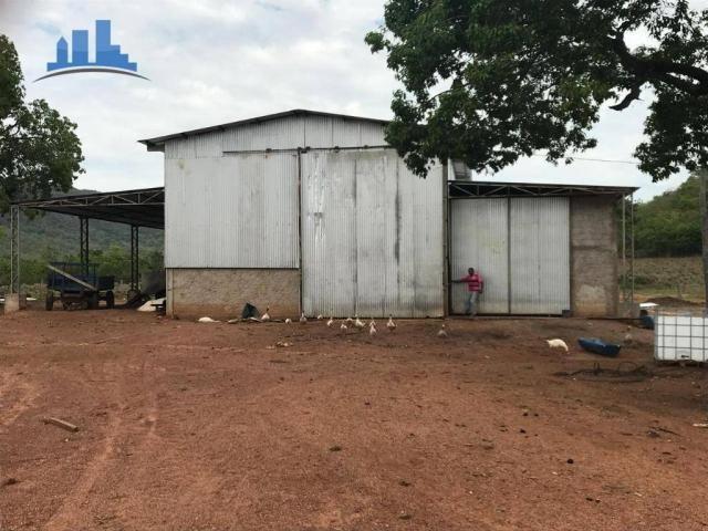Fazenda 1850 has no município de Nobres-MT, na região de Bom Jardim; - Foto 14