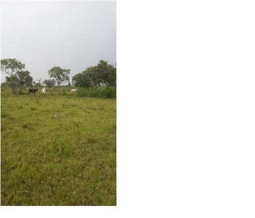 40ha. 10km de Cuiabá mt -pastagens cercados, casa, poço semi-artesiano - Foto 3