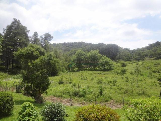 Sitio com 780.000 m² por R$ 1.150.000 - Ponte Nova - Teresópolis/RJ - Foto 3