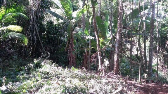 Terreno residencial à venda, Três Córregos, Teresópolis. - Foto 9