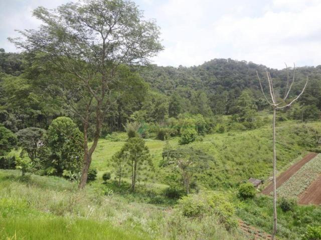 Sitio com 780.000 m² por R$ 1.150.000 - Ponte Nova - Teresópolis/RJ