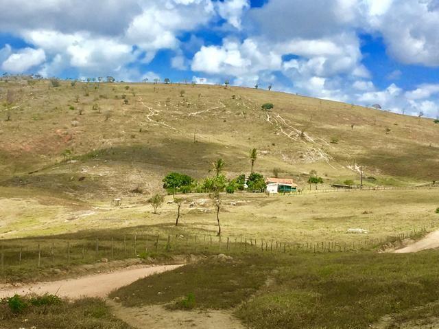 Fazenda em Boa Nova BAHIA com 167he - Foto 8