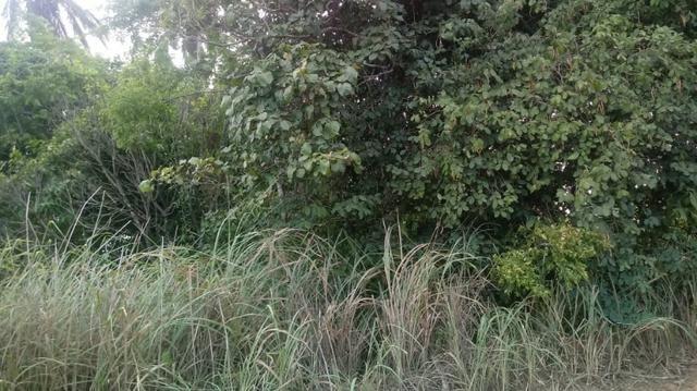 Ótima propriedade de 2 hectares, em Chã de Alegria-PE. R$ 140 mil - Foto 4