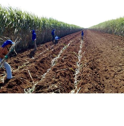 135 alqueires Cana São Paulo?SP, Troca Fazenda Pecuária Norte de mato Grosso - Foto 2