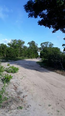 Fazenda com 150 hectares - Região da Soja (Balsas-MA) - Foto 9