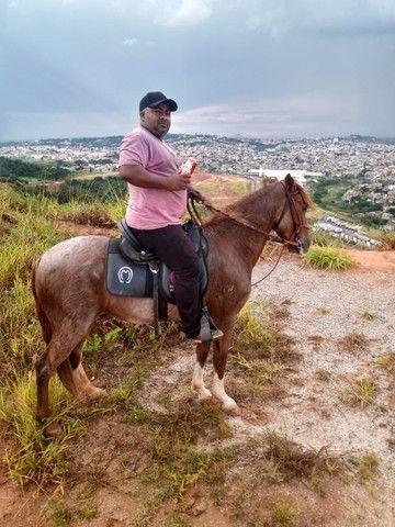 Cavalo marcha picada - Foto 4