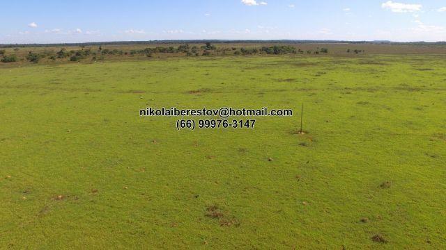 Fazenda 470 hectares nordeste mt nikolaiimoveis