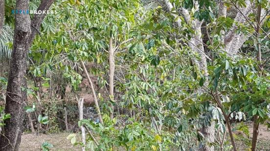 Sítio no Município de Alto Paraguai à venda, 320000 m² por R$ 815.000 - Zona Rural - Cuiab - Foto 6
