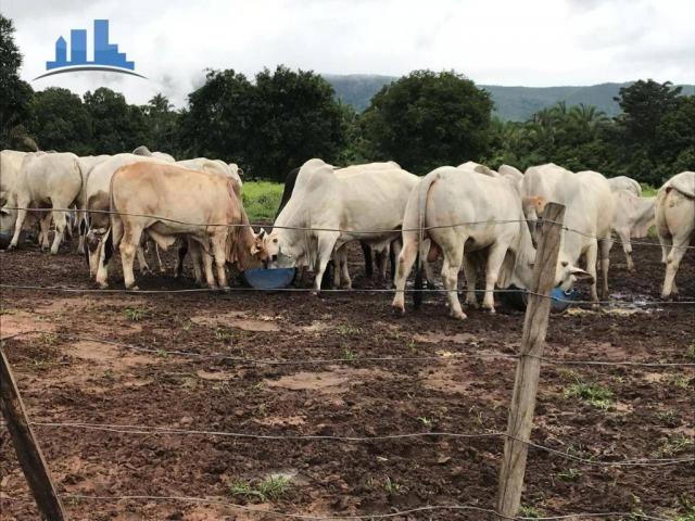 Fazenda 1850 has no município de Nobres-MT, na região de Bom Jardim; - Foto 12