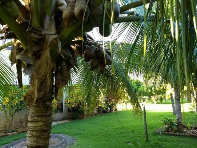 Fazenda 14alq Pronta Buritirana Palmas 1.2milh Ac Prop Airton - Foto 5