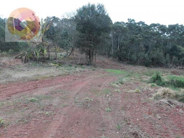 Chácara  à venda, 23000 m² por R$ 180.000 - Palmerinha - Campina Grande do Sul/PR - Foto 18