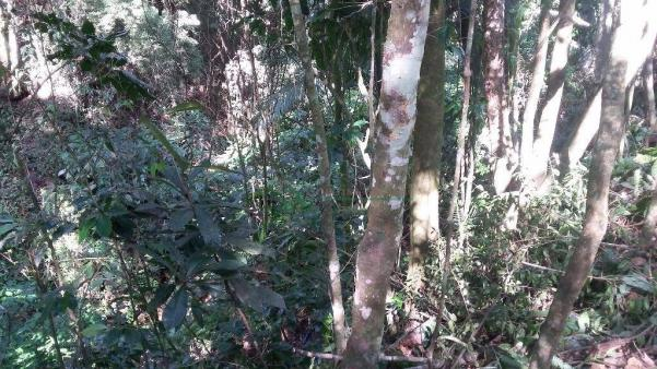Terreno residencial à venda, Três Córregos, Teresópolis. - Foto 12