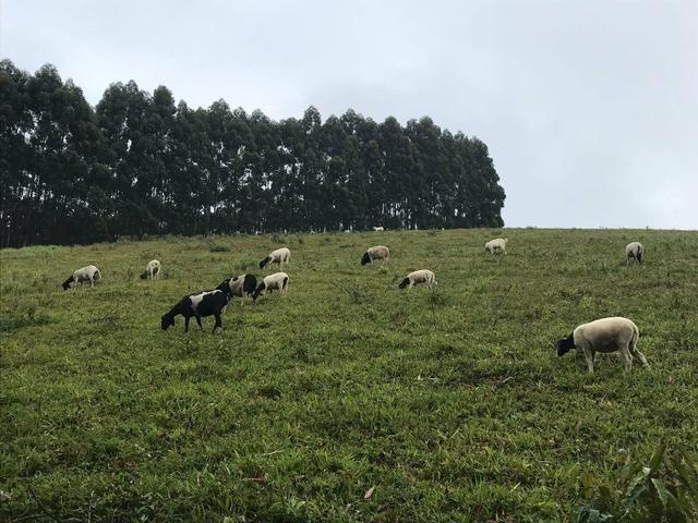 Vendo fazenda em Jiquiriçá ba