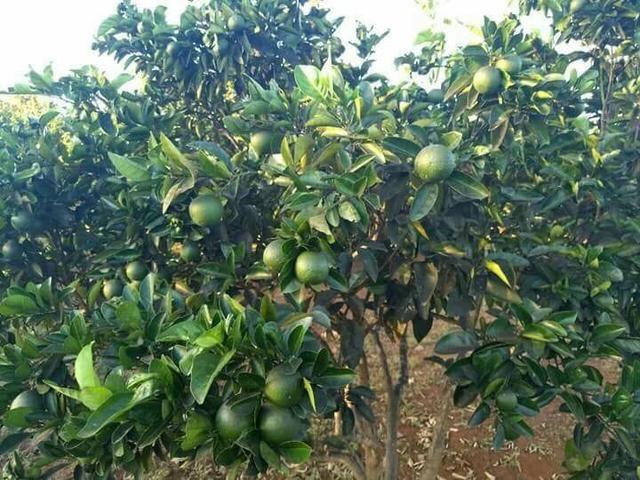 Fazenda 14alq Pronta Buritirana Palmas 1.2milh Ac Prop Airton - Foto 15