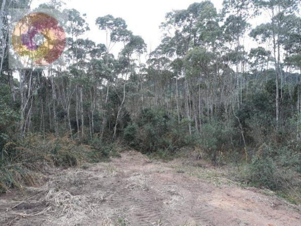 Chácara  à venda, 23000 m² por R$ 180.000 - Palmerinha - Campina Grande do Sul/PR - Foto 15