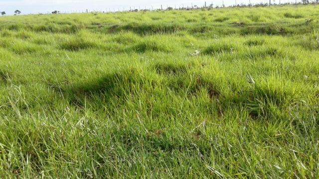 Paraiso.das.Aguas MS 355 alqueres - Foto 2