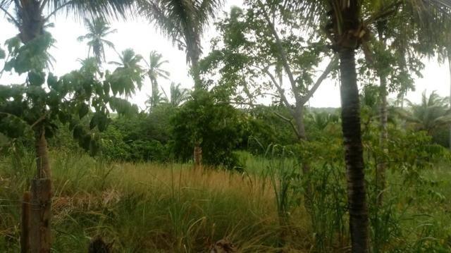Ótima propriedade de 2 hectares, em Chã de Alegria-PE. R$ 140 mil - Foto 3