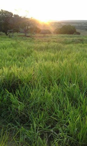 Fazenda em Ribeira do Pombal - Foto 12
