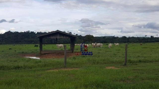 Fazenda Localizada na cidade de Buritis-RO - Foto 4