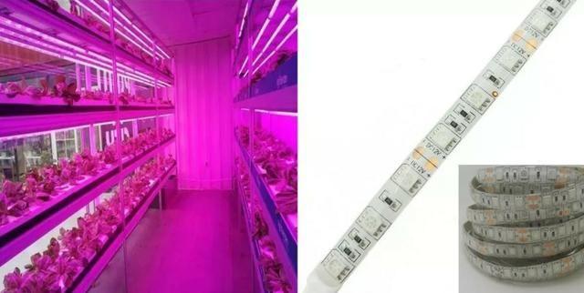 COD-CP325 1 Metro Fita Led Full Spectrum Indoor Grow 7red 1blue Cultivo Aquario - Foto 6
