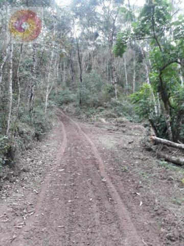 Chácara  à venda, 23000 m² por R$ 180.000 - Palmerinha - Campina Grande do Sul/PR - Foto 4