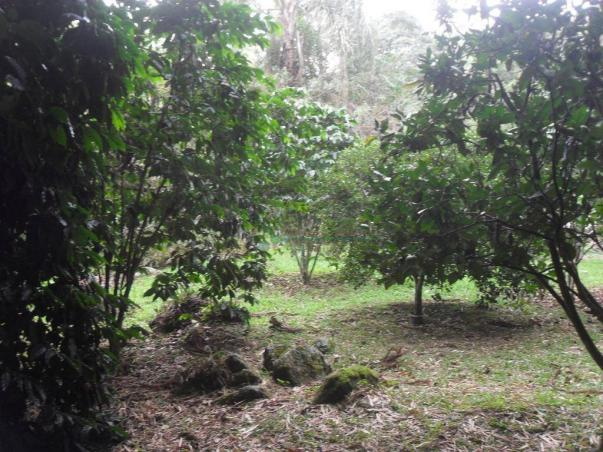 Sitio Teresópolis - Foto 9