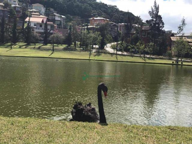 Terreno residencial à venda, Vargem Grande, Teresópolis. - Foto 13