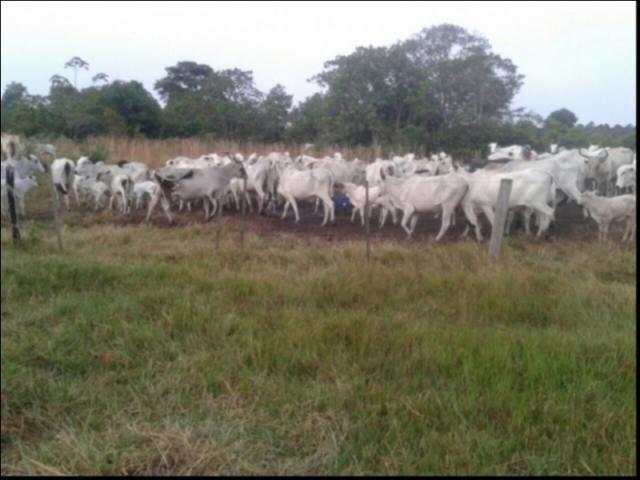 Fazenda no Fazenda em Santo Antonio do Leverger - Foto 7